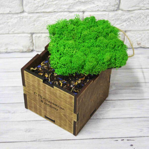 Эко-куб Натуральный мох